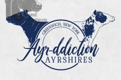 Ayr-ddiction-Ayrshires